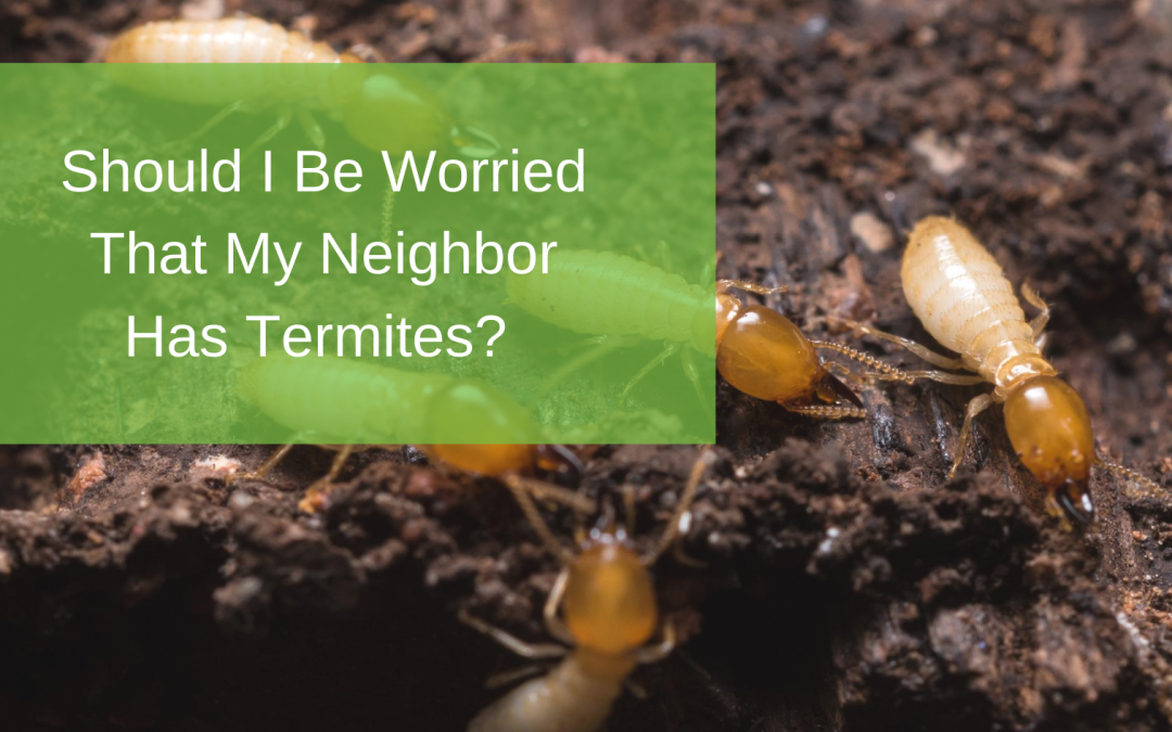 Should I Be Worried That My Neighbor Has Termites?
