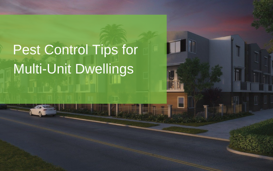 Pest Control Tips for Multi-Unit Dwellings