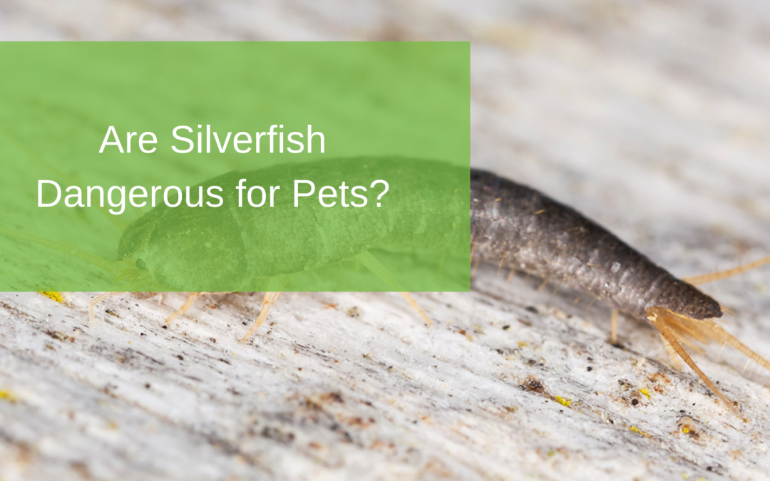 Are Silverfish Dangerous for Pets?