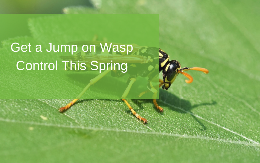 Get a Jump on Wasp Control This Spring