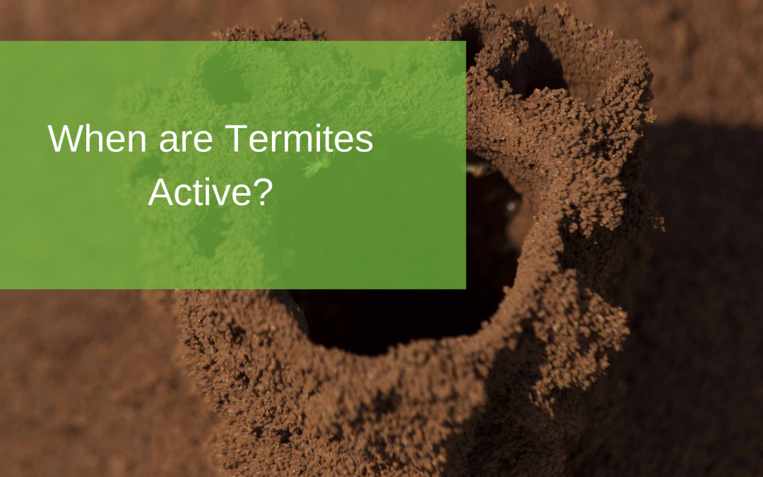When are Termites Active?