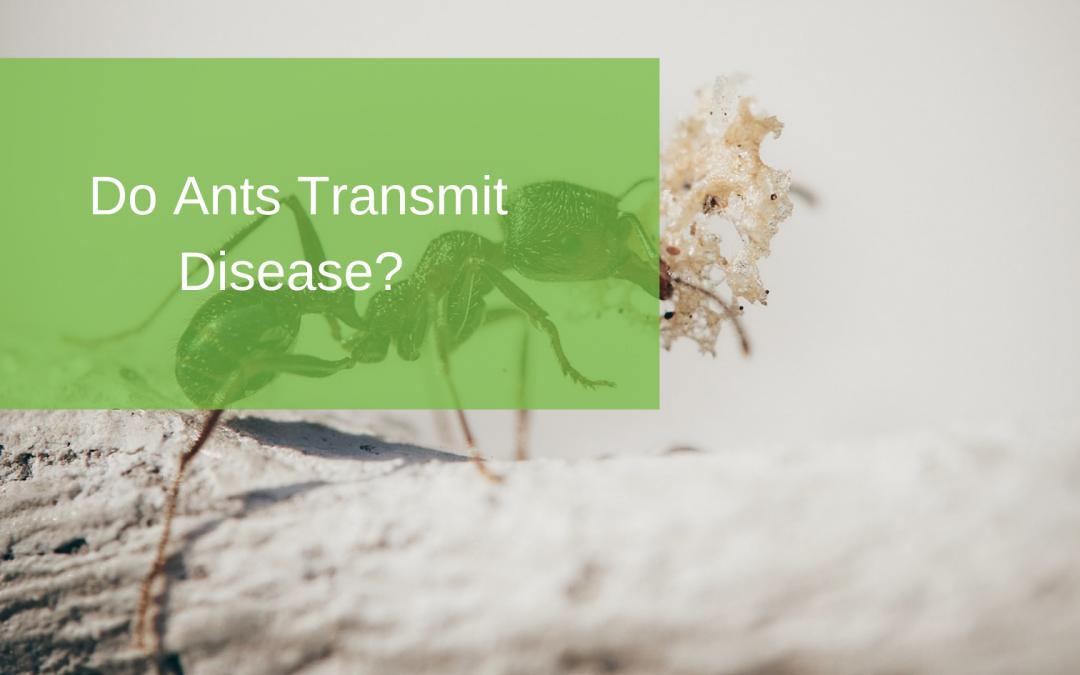 Do Ants Transmit Disease?