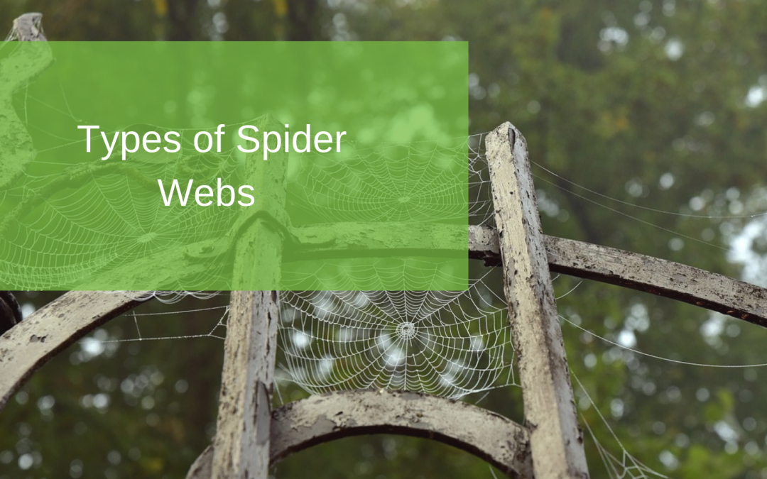 Types of Spider Webs