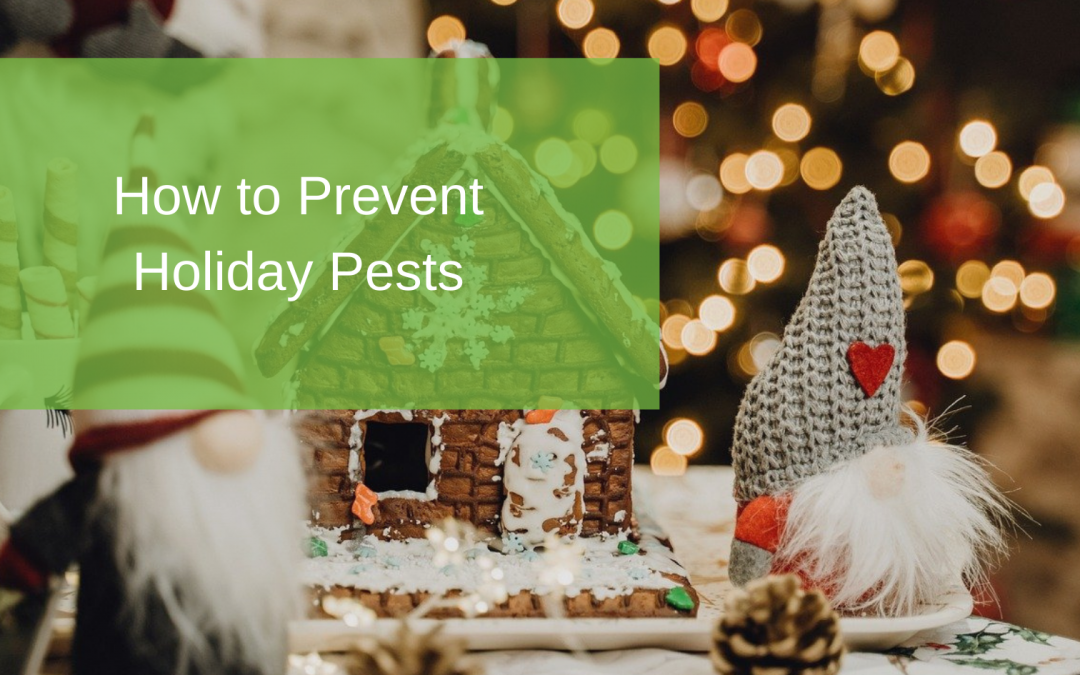 How to Prevent Holiday Pests