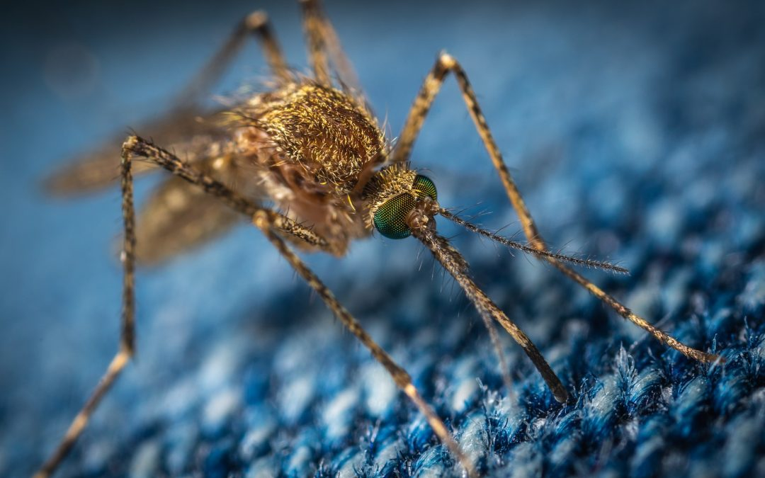 La Niña Likely Means More Mosquitoes This Summer